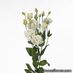 Эустома (Лизиантус) Alissa 1: White