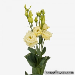 Эустома (Лизиантус) Alissa 2: Yellow