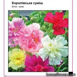 """Мальва (шток-роза) """"Королевская смесь"""""""