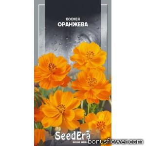 Космея Оранжевая
