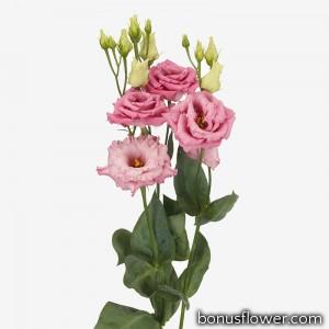 Эустома (Лизиантус) Alissa 1: Rose