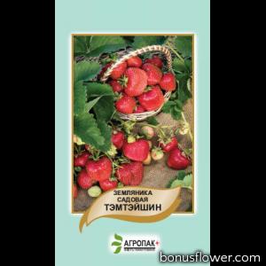 Земляника садовая Тэмтэйшн