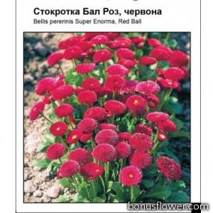 Маргаритка Бал Роз, красная
