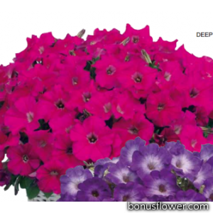 Петуния Gioconda F1 Deep Rose