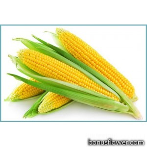 Кукуруза сахарная Веге F1