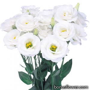 Эустома (Лизиантус) Rosita® 2: White