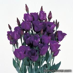 Эустома (Лизиантус) Piccolo® 2: Deep Blue