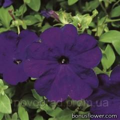 Петуния многоцв Hurrah® F1 Blue