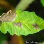 Фунгіциди (від хвороби рослин)