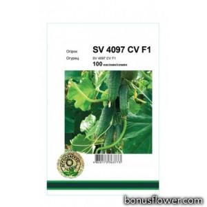 Огурец SV 4097 CV F1