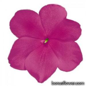 Бальзамин Lollipop™: Raspberry Violet