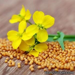 Семена горчицы желтой, 1 кг