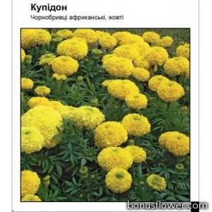 """Бархатцы """"Купидон"""" желтые"""