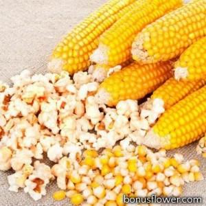 Кукуруза попкорн Пинг-Понг