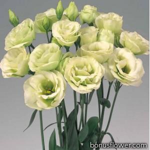 Эустома (Лизиантус) Rosita® 2: Green