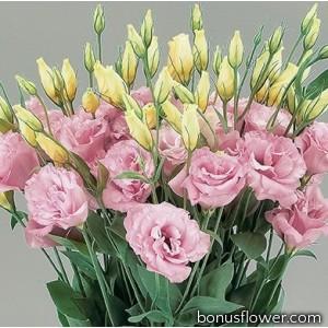 Эустома (Лизиантус) Super Magic Rose