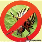 Інсектициди (від шкідників рослин)