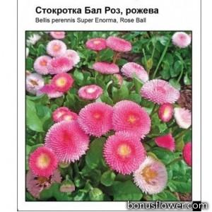 Маргаритка Бал Роз, розовая