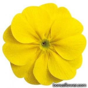 Примула бесстеб. Danova: Lemon Yellow