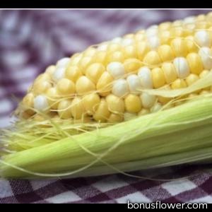 Кукуруза сахарная Камберленд  F1