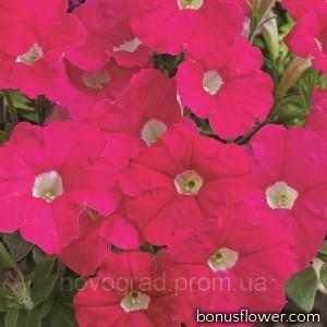 Петуния мелкоцв Picobella™ F1 Rose