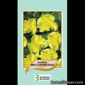 Энотера миссурийская, желтая