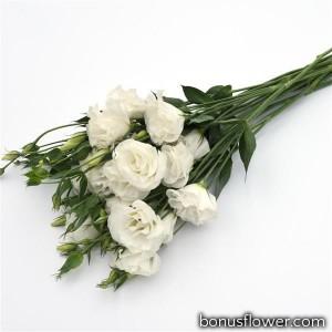 Эустома (Лизиантус) ABC 3 WHITE