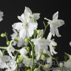 Дельфиниум крупноцв, Delfix® White