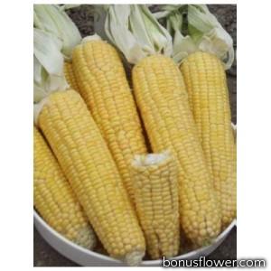 Кукуруза сахарная Лонга F1