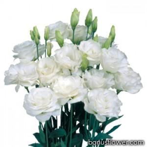 Эустома Mariachi®: Pure White