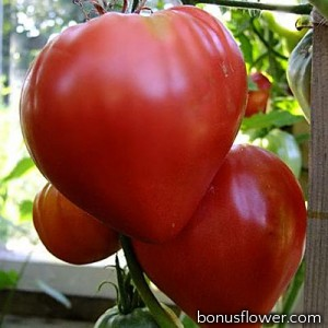 Томат Бычье сердце, красное