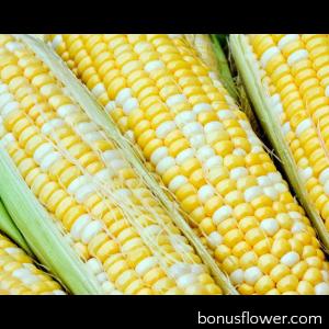 Кукуруза сахарная Мраморная F1