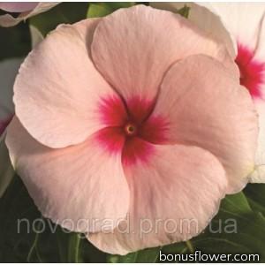 Катарантус роз Cora®Cascade Apricot