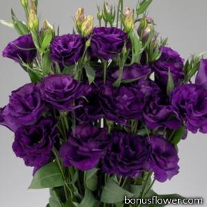 Эустома (Лизиантус) Advantage F1 Purple