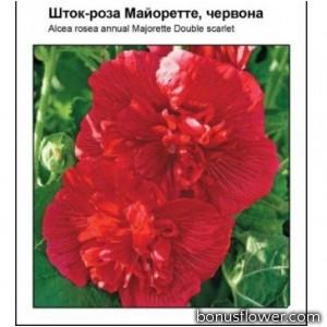 Мальва Майоретте красная