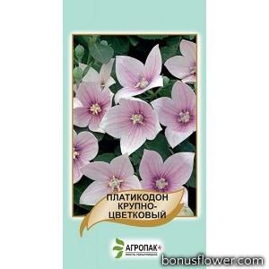 Платикодон крупноцветковый Розовый