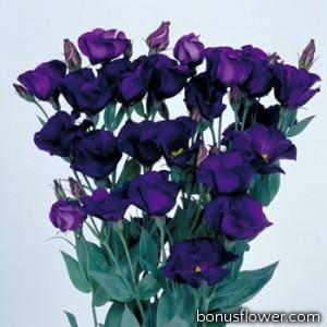 Эустома Piccolo® 2: Violet