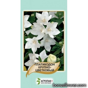 Платикодон крупноцветковый Белый