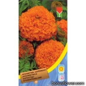 Бархатцы прямостоячие Оранжевые