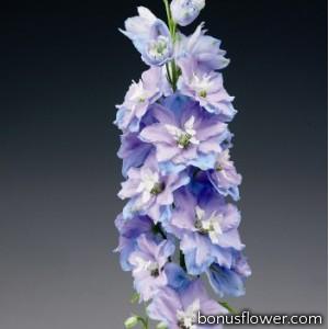 Дельфиниум Excalibur™ Light Blue White Bee