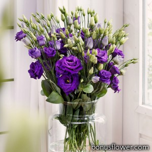 Эустома (Лизиантус) Rosita® 4: Purple
