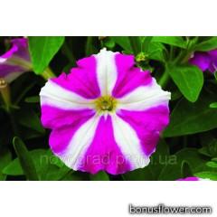 Петуния Picobella™ F1 Rose Star