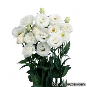 Эустома (Лизиантус) Rosita® 4: White