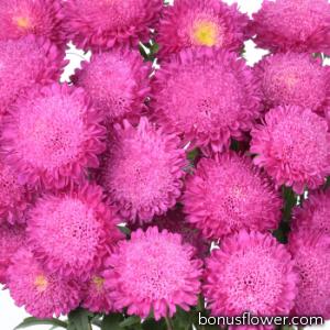 Астра на срез Bonita: Pink