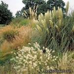 Семена декоративных трав